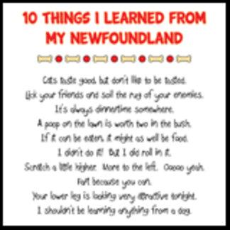 10 Things I Learned From My Newfoundland Joke