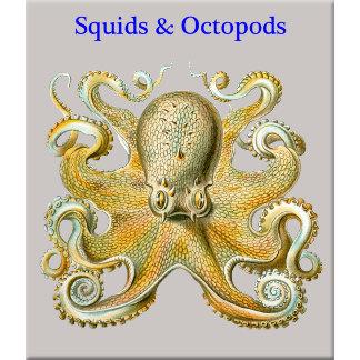 Squid & Octopods