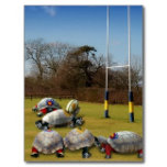 turtle_rugby_postcards-r3e715902be3d4ad68caa292497