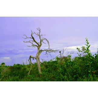 dead tree purple  green leaves sky florida scene