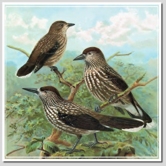 BIRDS N - Q