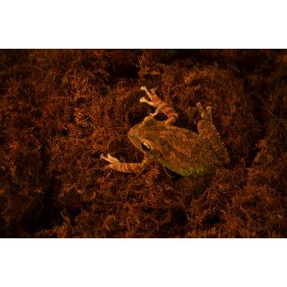 tree frog in moss animal design