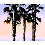 san-diego-palms-trees- PS LARGE.jpg