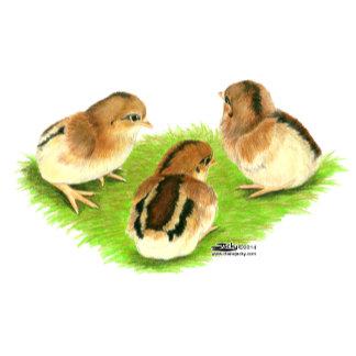 Aseel Black Red Chicks