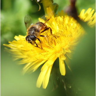 Wasp on a Dandelion