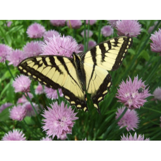 Butterfly Chive patch