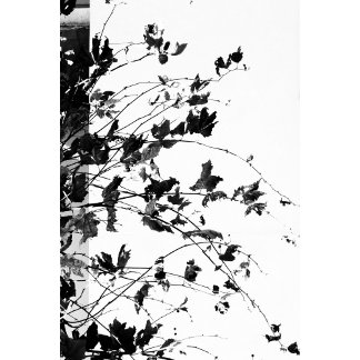 Autumn candy in black and white