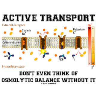 Active Transport Don't Even Think Of Osmolytic