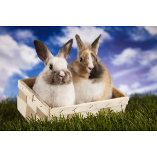 Domestic Bunnies