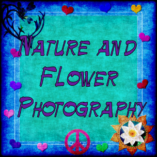 NATURE AND FLOWER PHOTOGRAPHY