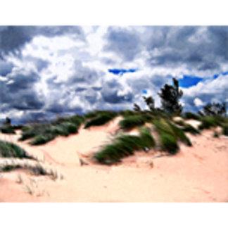 Sandy Beach Dune Grass