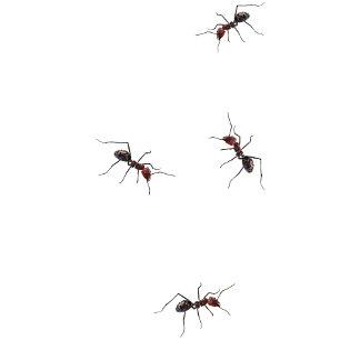 Ants in yer . . .