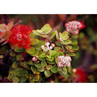 Lehua Blossoms In Hawaii Volcanoes