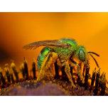 Bee Getting Sweet 1.jpg