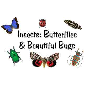 Insects: Butterflies & Beautiful Bugs