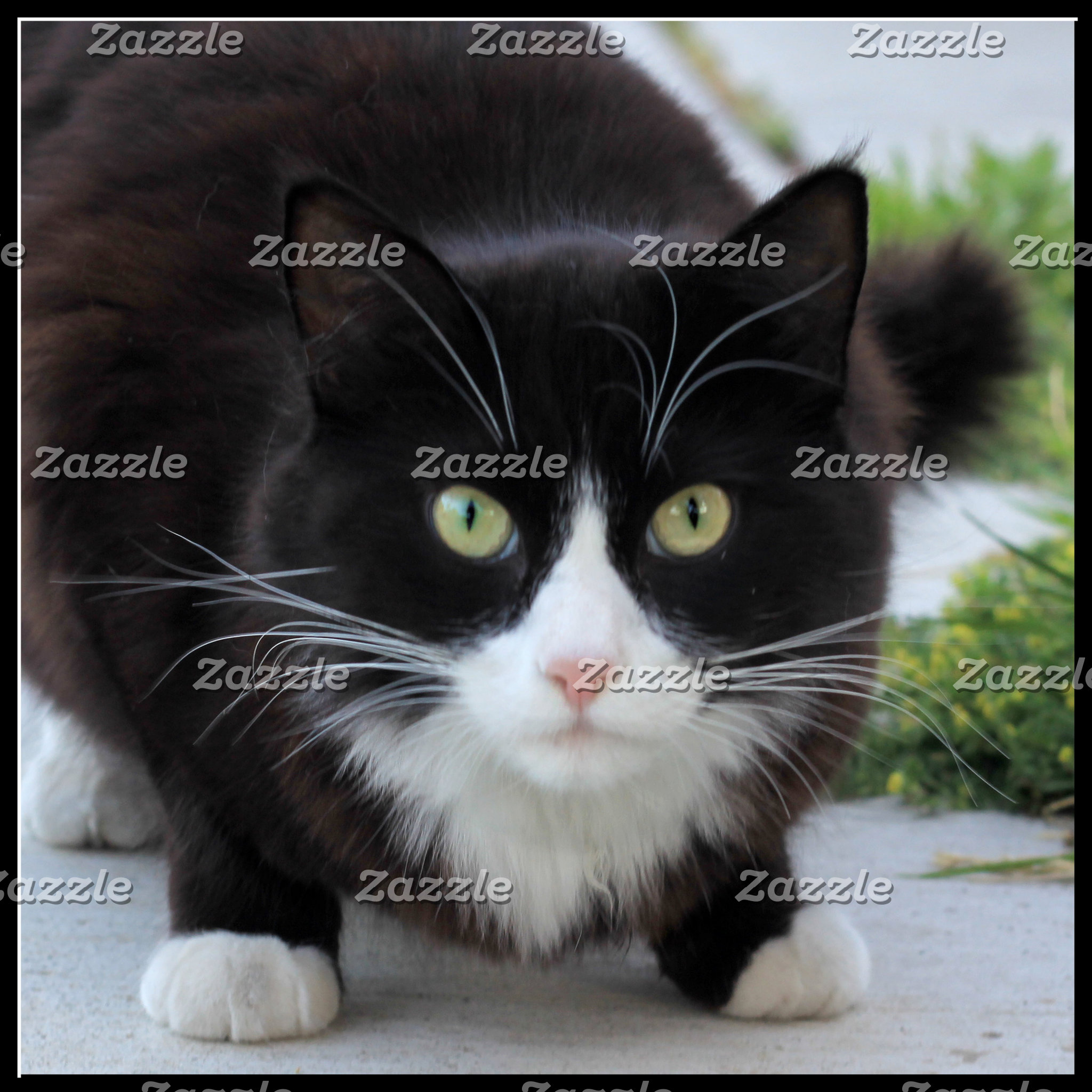 Black and white cat 2