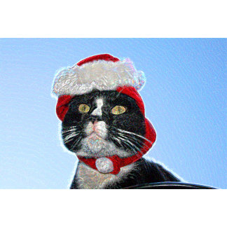 tuxedo cat wearing santa hat sparkle
