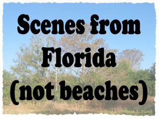 Florida Scenes (not beach)
