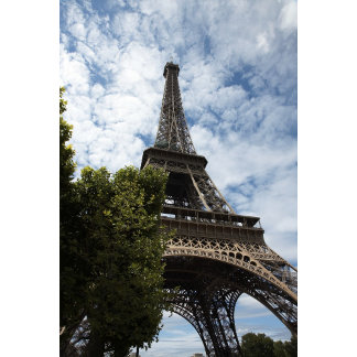 France, Paris, Eiffel Tower and tree, low angle