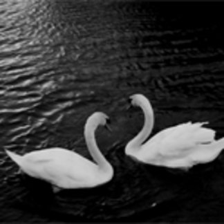 Twin Swans