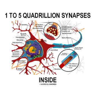 1 To 5 Quadrillion Synapses Inside Neuron Synapse