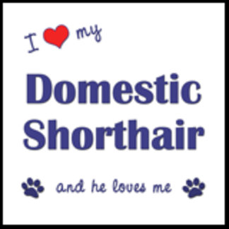 I Love My Domestic Shorthair (Male Cat)