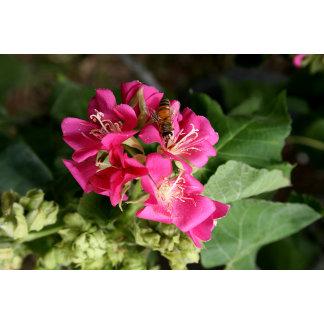 bee in pink multiple flowers