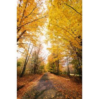 Fall Foliage Autumn Foliage