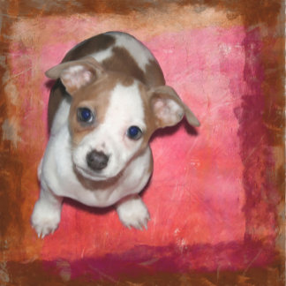 """Jack Russell """"Bonnie"""""""