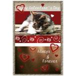 KittenVDay.jpg
