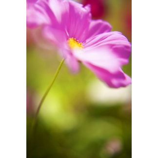 Soft Focus Pink Flower