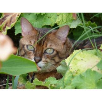 Hiding in the Garden