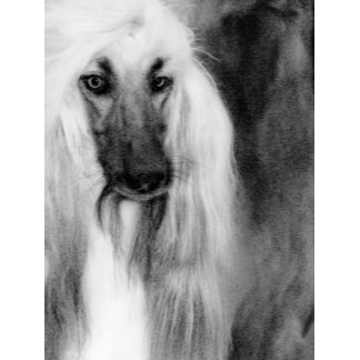 Gorgeous Afghan Hound