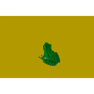 Green colorzed frog against yellow look up