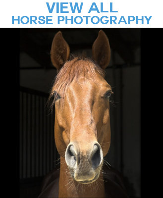 Horses Photo Images Gift Products