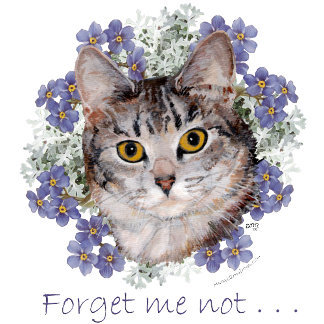 Tabby Cat Forget-Me-Not