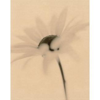 """Daisy Sepia Photo Poster Print"""