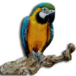 Parrot yellow alone.jpg