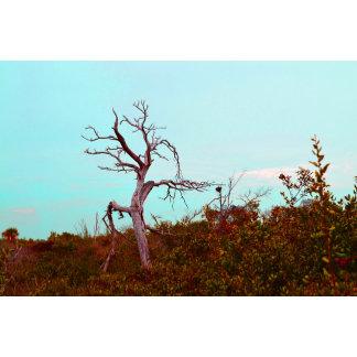 dead tree teal sky colored florida scene