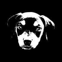Dobe Pup -bw