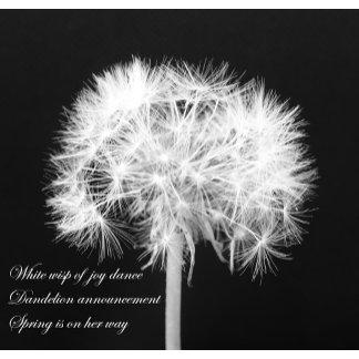 Dandelion Haiku