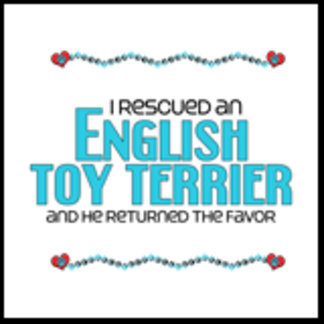 I Rescued an English Toy Terrier (Male Dog)
