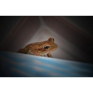 Frog behind blue neat animal amphibian photo
