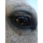 eyeofhorse.jpg.JPG