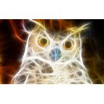 X-Ray Owl.jpg