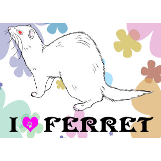 Ferret (7)
