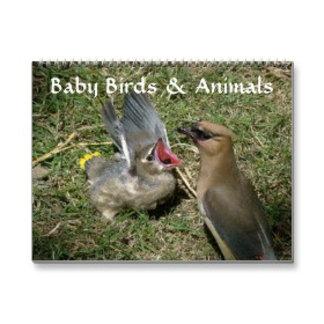 Baby Birds and Animals