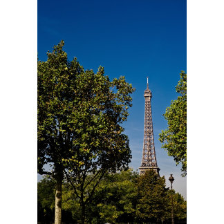 Eiffel Tower and trees, Paris, france