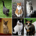 Collage_of_Six_Cats-02.jpg