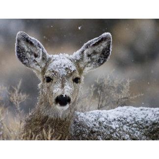 Mule Deer J.L. Wooden hier res
